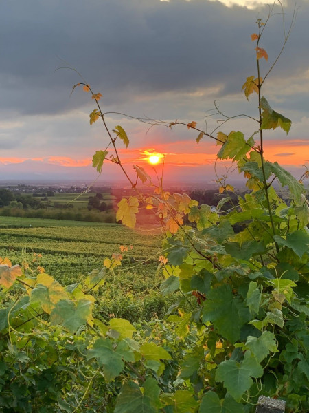 Foto-Ottmar-Ruf-31-08-21-Abendstimmung-im-Sonnenwinzerland-1000